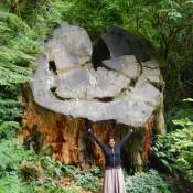 Giant Redwood Base Lauren