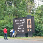 Entering Redwood National Forest