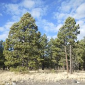 Coconino National Forest in Arizona - The Drive Grand Canyon