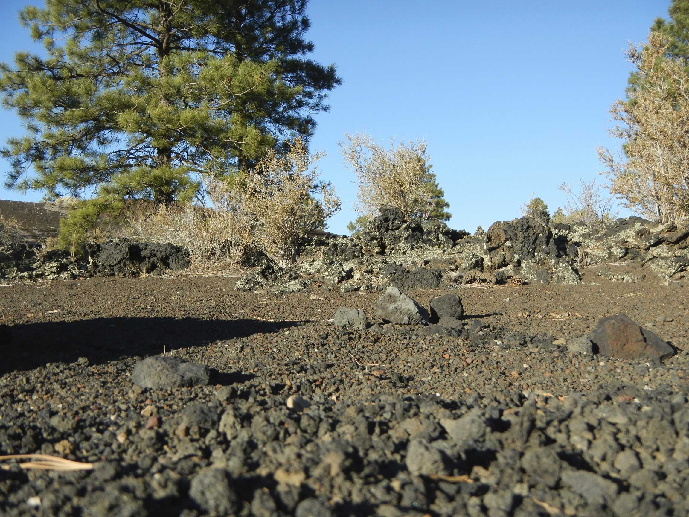 The lava rocks up close