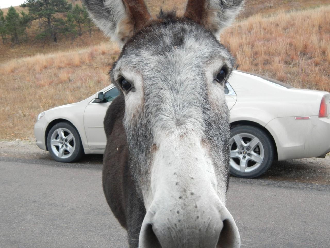 Road Trip Planner Donkey