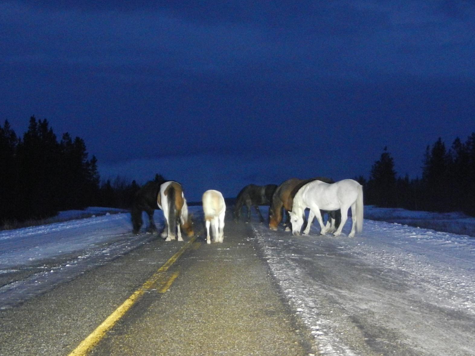 The Alaska Canada Highway Guide Road Trip Planner AlCan Photos - Trip to alaska