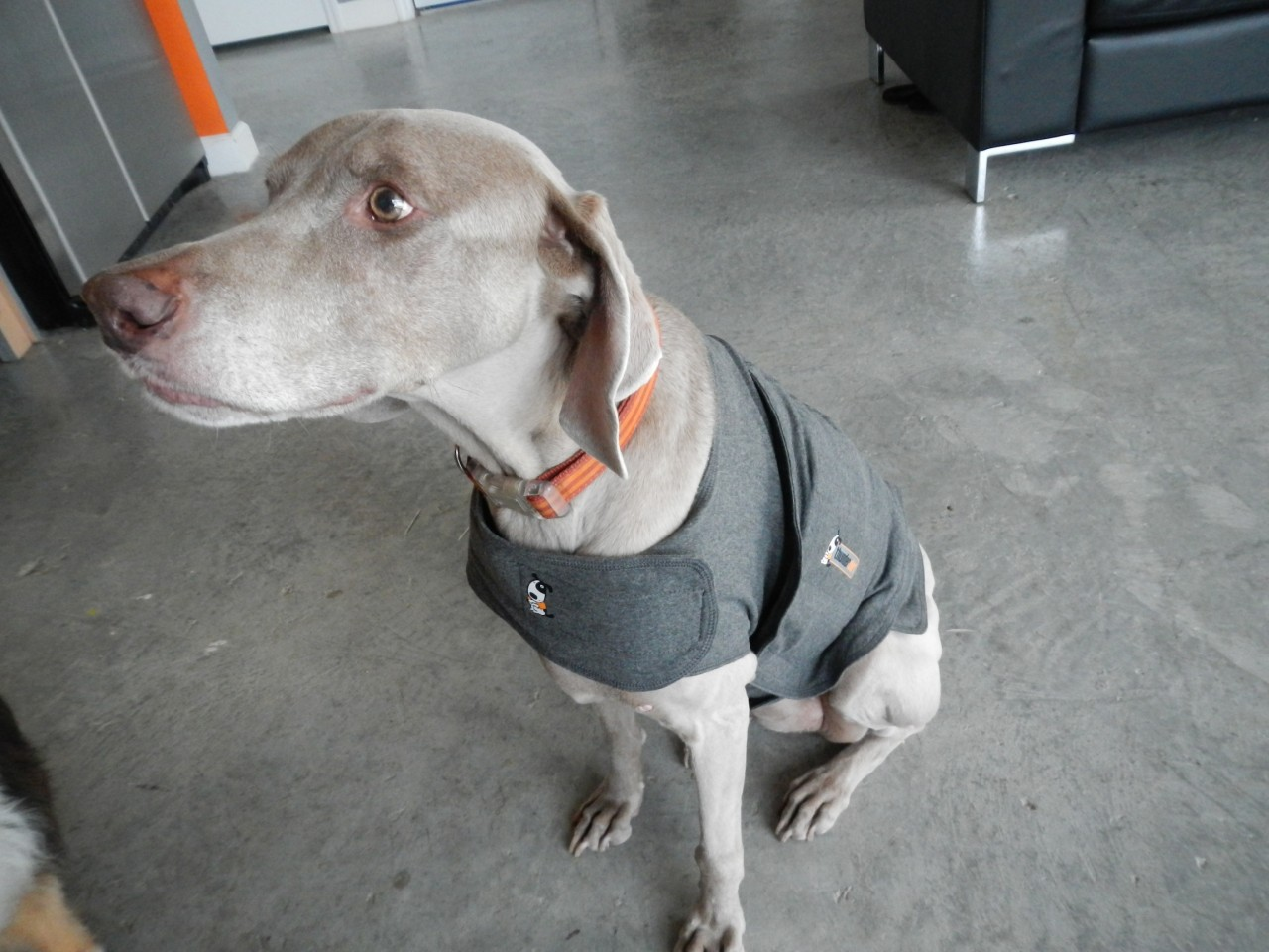 Shirts For Dogs India