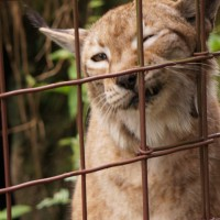 The cats at Big Cat Rescue need us.