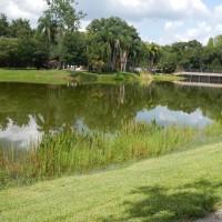 Big Cat Rescue Lake