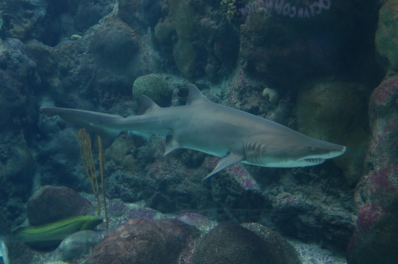 Coral Reefs Exhibit at the Florida Aquarium in Tampa Bay