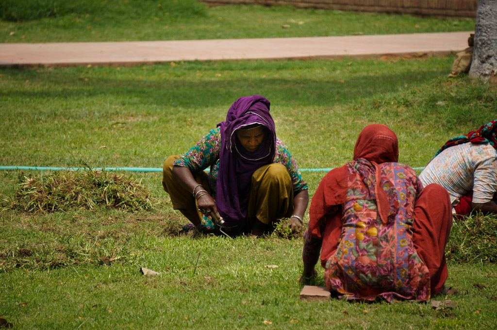 Indian women cutting grass
