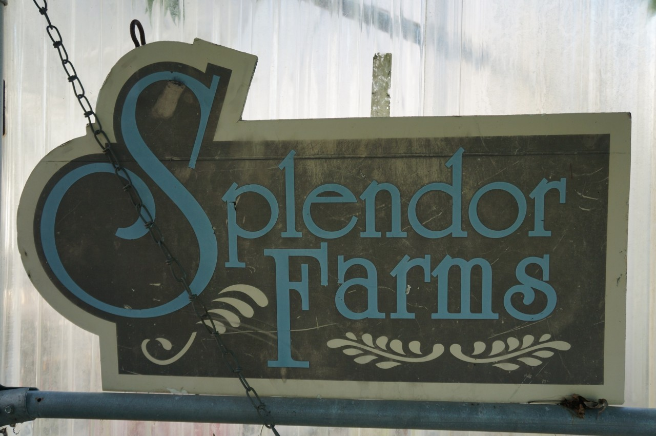 Splendor Farms B&B