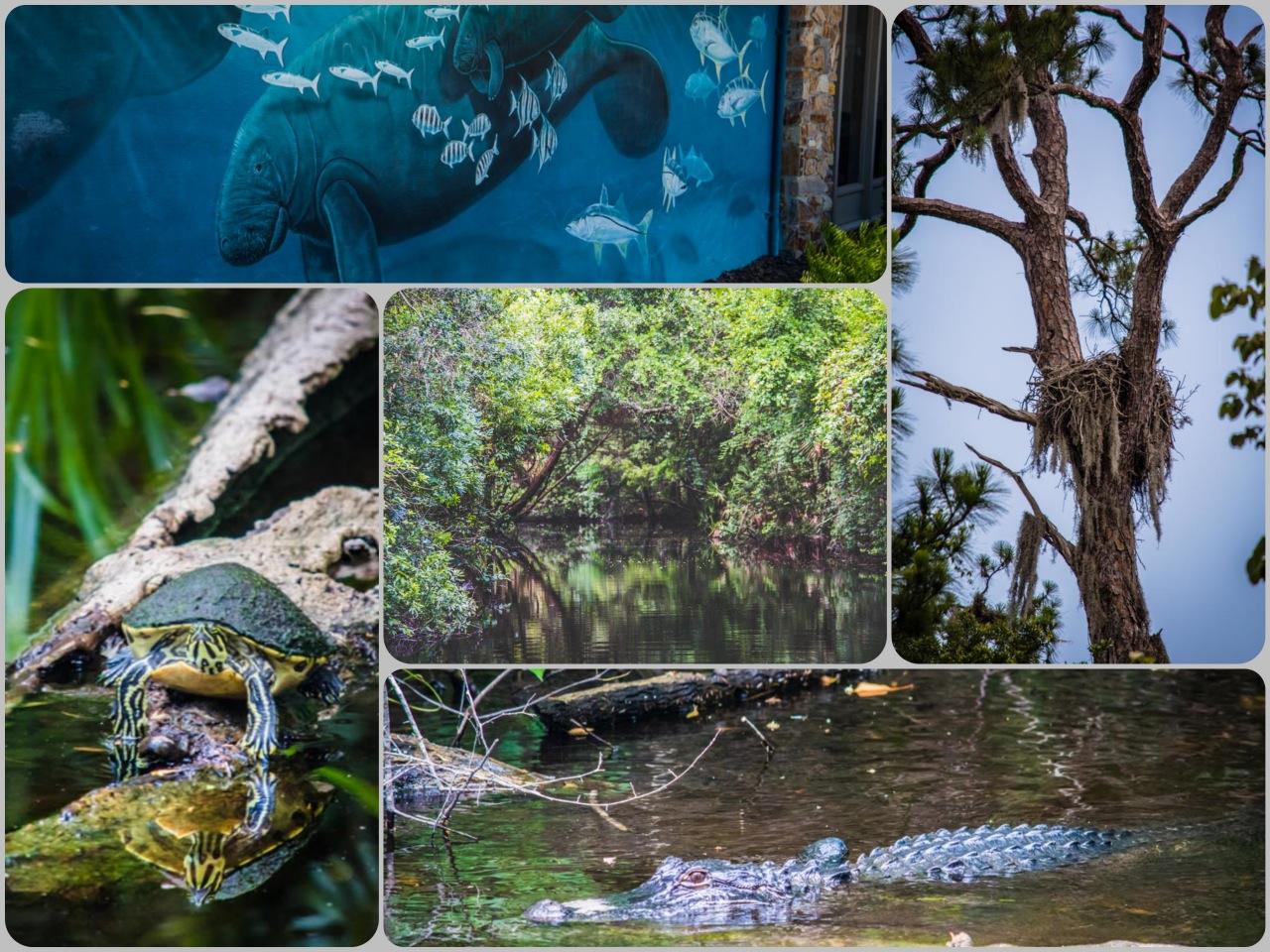 Ellie Wild Life Park Citrus County FL