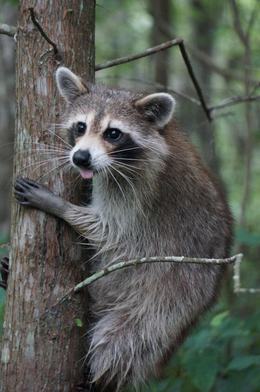 20 Wildlife Photos | Best Wildlife Photos North America