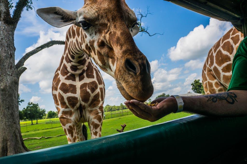Global Wildlife Center Folsom