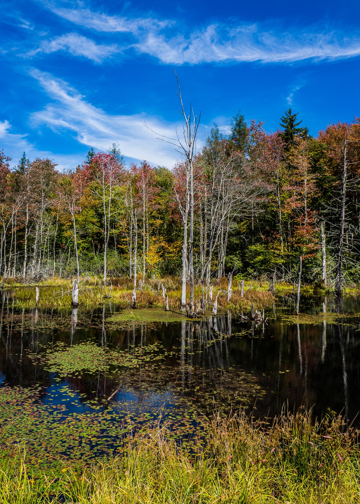 virginia picturesque and genteel We will write a cheap essay sample on an uprising in 1676 in the virginia colony in north america specifically for you virginia: picturesque and genteel.